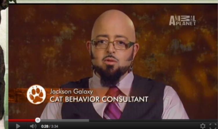 Jackson galaxy heapers 39 hangout for Jackson galaxy music